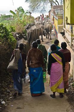 Local women in Mayapur (John Fahy, 2013)
