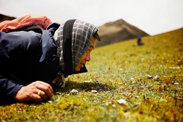 Hunting Cordyceps in Bhutan (Jonathan Taee, 2013)