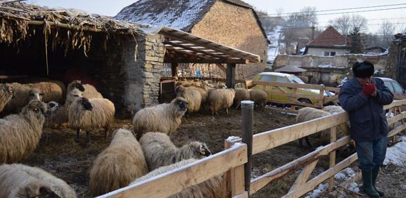 Huw Williamson - Sheep fold, Romania