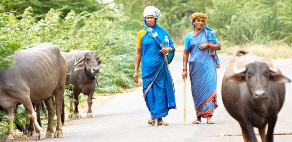Women farmers in Karnataka, India